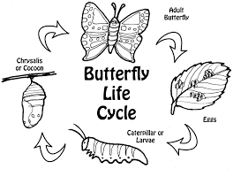 life cycle of a butterfly coloring page with pumpkin life cycle
