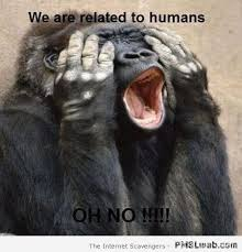 Humans Meme - 17 we are related to humans monkey meme pmslweb