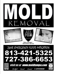ta s mold removal experts ta mold removal and remediation