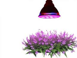 Grow Lights For Plants Can I Use Artificial Lights Like Led To Grow Plants Instead Of