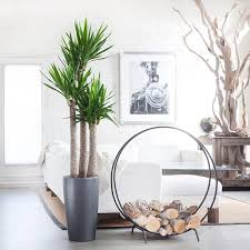 indoor plants nyc office and house plant delivery service in new