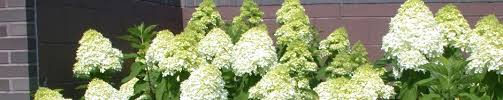 professional experience wisconsin woody ornamentals program