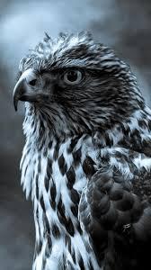 eagle bird animal in dark iphone 8 wallpaper download iphone