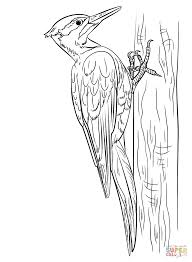 woodpeckers coloring pages free coloring pages