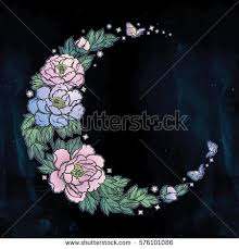 moon flowers moon flower stock images royalty free images vectors