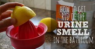 How To Make Bathtub Cleaner How To Get Rid Of The Bathroom Urine Smell