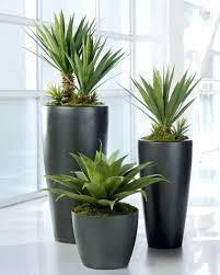indoor plants india ceramic pots for indoor plants online india pots for large indoor