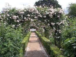 victoria u0027s backyard the rose gardens at mottisfont abbey