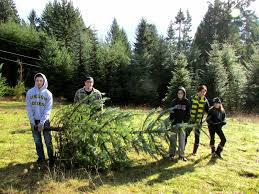 beautiful unsheared christmas tree part 13 barcana noble fir