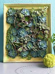 make a living succulent picture