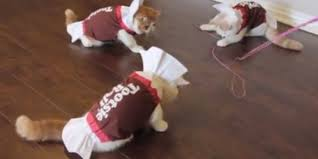 kittens in tootsie roll halloween costumes are too sweet to handle