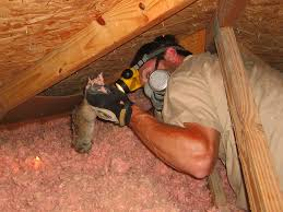dead animal in the attic signs danger what to do