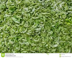 green roses green roses background royalty free stock photo image 31641935