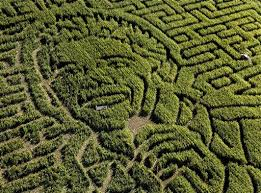 photos interesting corn mazes and field designs from around