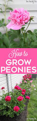 When Should I Start Planting My Vegetable Garden by Growing Peonies