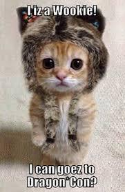 Good Morning Cat Meme - cute cat good morning memes for her meme good morning images