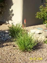 Landscaping Albuquerque Nm by Albuquerque Xeriscape Design Landscaping U0026 Rebates