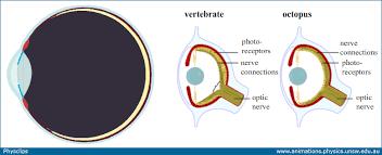 Blind Spot In Eyes Eye Optics Anatomy And Accommodation Physclips Light