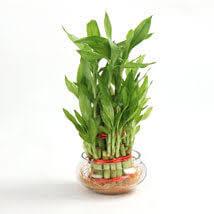 indoor plants online best indoor plants india ferns n petals