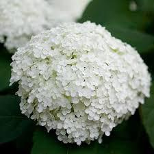 1736 best flower gardens images on pinterest flower gardening