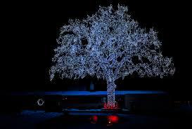 tree lights bloomington minnesota flickr