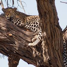 south africa luxury safaris and tailor made travel out adventures