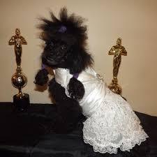dog wedding dress dog dresses for weddings all women dresses