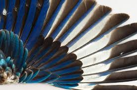 Bird Wing - the of the s largest bird wing collection