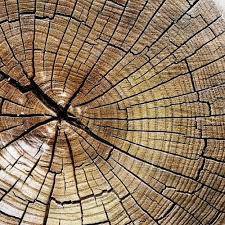 wood tree rings images 13 best tree rings images tree rings wood and forests jpg