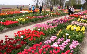 flower places visit the tulip festival in