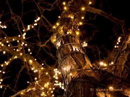 miami christmas lights christmas light installation miami