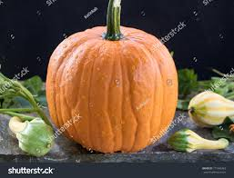 Small Pumpkins Big Hokkaido Pumpkin Small Pumpkins Leaves Stock Photo 711945463