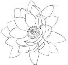 lotus flower line drawing lotus flower drawing lotus flower