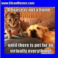 Clean Memes - clean memes clean memes 01 24 2018