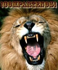 imagenes de leones salvajes gratis imágenes de leones leonpedia