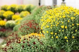 Fall Garden Plants Texas - best plants to plant in the fall 25 best texas fall garden ideas