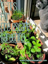 Vegetable Pot Gardening For Beginners 5 Tips For Successful Fire Escape And Container Gardening Red