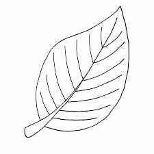 moldes de hojas de flores para colorear hojas pinterest