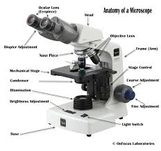 why is a light microscope called a compound microscope microscope microscope talk