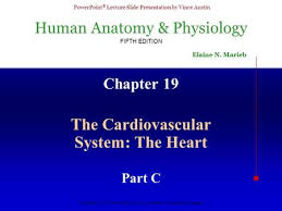 Human Anatomy And Physiology Marieb 5th Edition Anatomy And Physiology Ppt Video Online Download