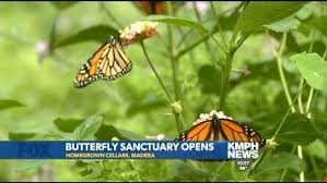 butterfly sanctuary opens in madera kmph