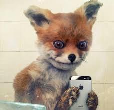 Fox Meme - create meme stoned fox selfie stoned fox selfie stoned fox