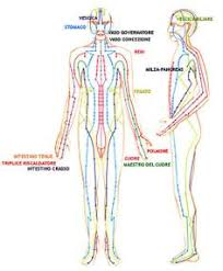 Human Anatomy Skeleton Diagram Anatomy Difference Between Male And Female Human Skeleton Male Vs