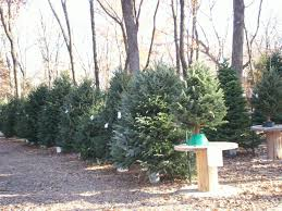 pre cut christmas trees wintergreen christmas tree farm