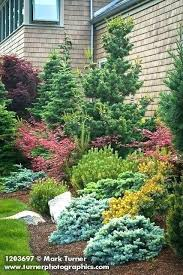 growing evergreen trees for landscaping ornamental evergreen