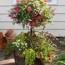 26 best whiskey barrel planters images on pinterest whiskey