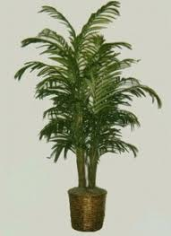 one 8 artificial deluxe areca palm tree in basket silk tree