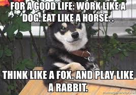 Gay Horse Meme - for a good life work like a dog eat like a horse think like a