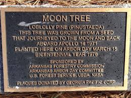 where are apollo 14 moon trees