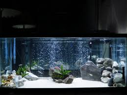 ideas about fish aquarium decorations on tanked
